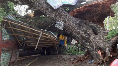 Photo of জয়পুরহাটে টর্নেডোয় ৪০ গ্রাম লণ্ডভণ্ড: নিহত ৪