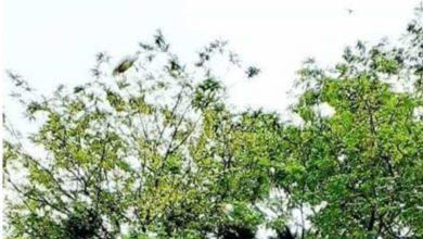 Photo of গ্রামবাসীর ভালোবাসায় সৃষ্টি হয়েছে পাখিদের অভয়ারণ্য!