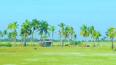 Photo of ঘুরে আসুন অপরুপ সৌন্দর্যের লীলাভূমি 'সন্দ্বীপ'