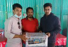 Photo of কামারখন্দে মেছো বিড়ালের বাচ্চা উদ্ধার